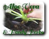 Aloe-vera-and-handy-herbs.com
